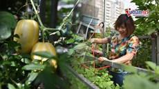 Nuôi gà, chim bồ câu; thu trăm kg rau, quả từ khu vườn sân thượng 40m2