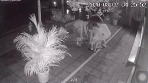 Rạng sáng, 3 người đi ô tô ngang nhiên trộm chậu hoa giấy trước cửa nhà