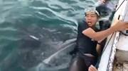 Khoảnh khắc du khách lặn biển đứng tim khi bị cá mập voi 'nuốt chửng'