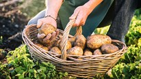 8 loại thực phẩm không bao giờ nên ăn sống