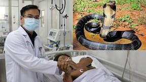Bị rắn độc cắn: Xử trí không đúng có thể gây tử vong tại chỗ