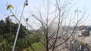 Phun thuốc đuổi sâu bò lúc nhúc, ăn trụi lá cây xanh ở TP.HCM