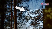 Ngôi nhà hình lập phương 'tàng hình' lơ lửng giữa rừng cây