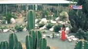 Giới trẻ mê mẩn check-in ở  'sa mạc thu nhỏ' giữa lòng Hà Nội