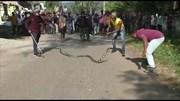 Người dân chen nhau xem bắt rắn hổ mang 'khủng' trước cổng trường tiểu học