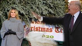 Bà Melania đón cây thông một mình, TT Trump có 'khách mời' đặc biệt