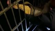Người đàn ông dùng dây thắt lưng cứu bé 3 tuổi rơi từ ban công tầng 13