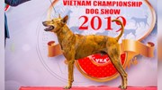 200 'thí sinh' tham dự cuộc thi 'Hoa hậu chó' ở TP.HCM