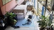 Dù bị cắn nhiều phát, chú chó vẫn quyết tâm giết chết rắn độc bảo vệ cụ bà