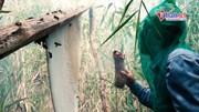 Đến U Minh Hạ, xuyên rừng tràm nguyên sinh, trải nghiệm nghề 'ăn ong'