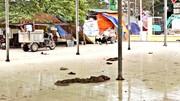 Đầu tư hơn 21 tỷ, chợ dân sinh ở Hà Nội thành chỗ thả chó, đậu xe