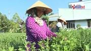 Nghề hái bông, nhặt nụ hoa thu tiền triệu ở miền Tây