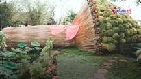 Chiêm ngưỡng bó hoa cúc mâm xôi lớn nhất Việt Nam tại làng hoa trăm tuổi