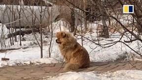 Chú chó ngày ngày ra bãi xe đợi chủ suốt 5 năm