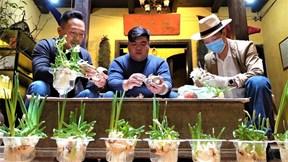Thú chơi hoa thủy tiên ngày Tết của người Hà Nội