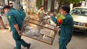 Đề xuất thả về rừng bầy khỉ leo nóc nhà, phá hoại vườn trái cây ở quận 12