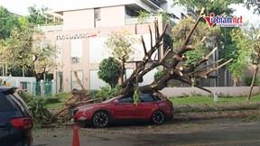 TP HCM: Mưa gió lớn, cây xanh bật gốc đè 1 người trong ô tô bị thương