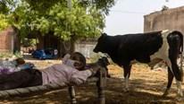 """Không bác sĩ, bệnh nhân Covid ở Ấn Độ tìm đến """"thần cây"""" chữa bệnh"""
