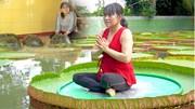 Kỳ lạ ngôi chùa có lá sen 'cõng người' và 2 cụ rùa hơn 100 tuổi ăn chay