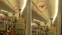 Máy bay phải hạ cánh khẩn cấp vì dơi bay lượn trong khoang