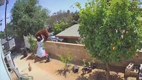 Cô gái 17 tuổi phản xạ cực nhanh đẩy ngã gấu hoang định 'đột nhập' vào nhà
