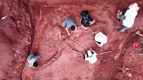Phát hiện hóa thạch khủng long khổng lồ 180 triệu năm tuổi