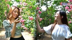 Cô gái Lào 5 năm mê đắm đường hoa tường vy đẹp ngây ngất Hà thành