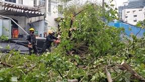 TP.HCM: Mưa lớn, gió giật, cây bật gốc làm gãy trụ điện, đè trúng shipper