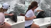 Hải cẩu đuổi theo thuyền đang chạy để xin ăn cá