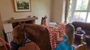 Chú ngựa vui vẻ làm bàn cho 2 cô bé tổ chức tiệc trà trên lưng