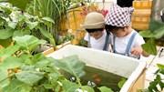 Trồng rau sân thượng tặng hàng xóm, làm khu vui chơi cho con mùa Covid-19