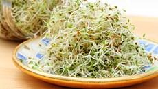 Ăn sống các loại rau mầm ảnh hướng tới sức khoẻ như thế nào?