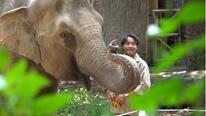 34 người vất vả chăm sóc 1.500 động vật ở Thảo Cầm Viên Sài Gòn mùa dịch