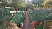 Cổ thụ 60 năm tuổi bật gốc, đè sập chuồng thú Thảo Cầm Viên Sài Gòn