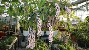 Ông bố ở Hà Nội chi 400 triệu làm vườn sân thượng như rừng nhiệt đới