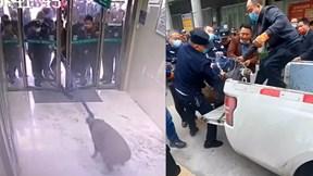Nhân viên đóng cửa ngân hàng, báo cảnh sát vì bị lợn rừng 'đột nhập'