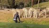 Thăm quan safari, khách du lịch nhảy xuống xe lao về phía hỗ dữ